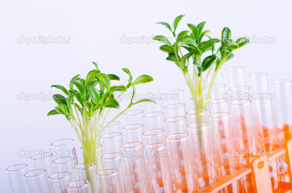 Lab experiment with green seedlings — Stock Photo #6844505