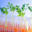 Lab experiment with green seedlings — Stock Photo #6885946