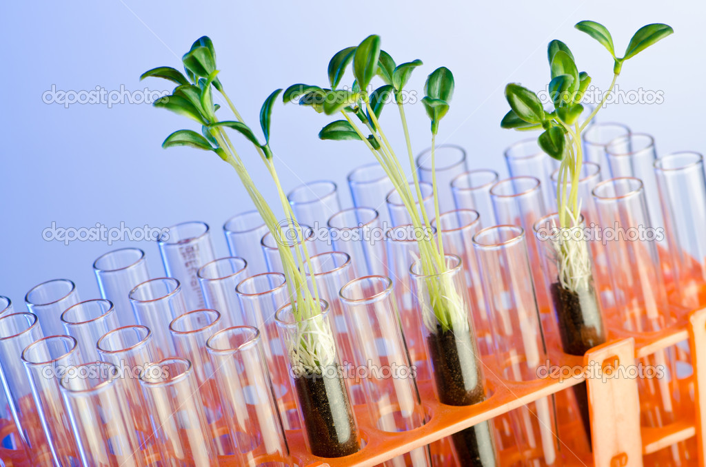 Experiment with green seedlings in the lab — Stock Photo #6885685