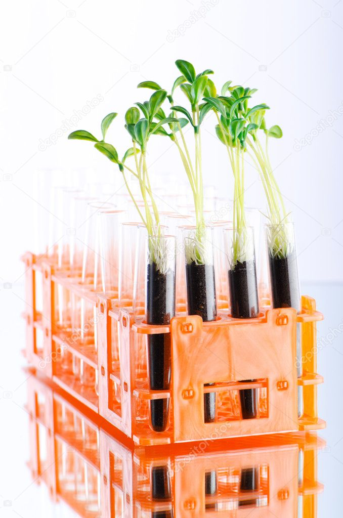 Lab experiment with green seedlings — Stock Photo #6885731
