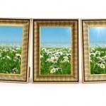 margarida flores nos frames de retrato em branco — Foto Stock