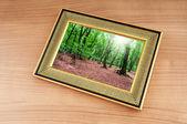 在画框上的森林 — 图库照片