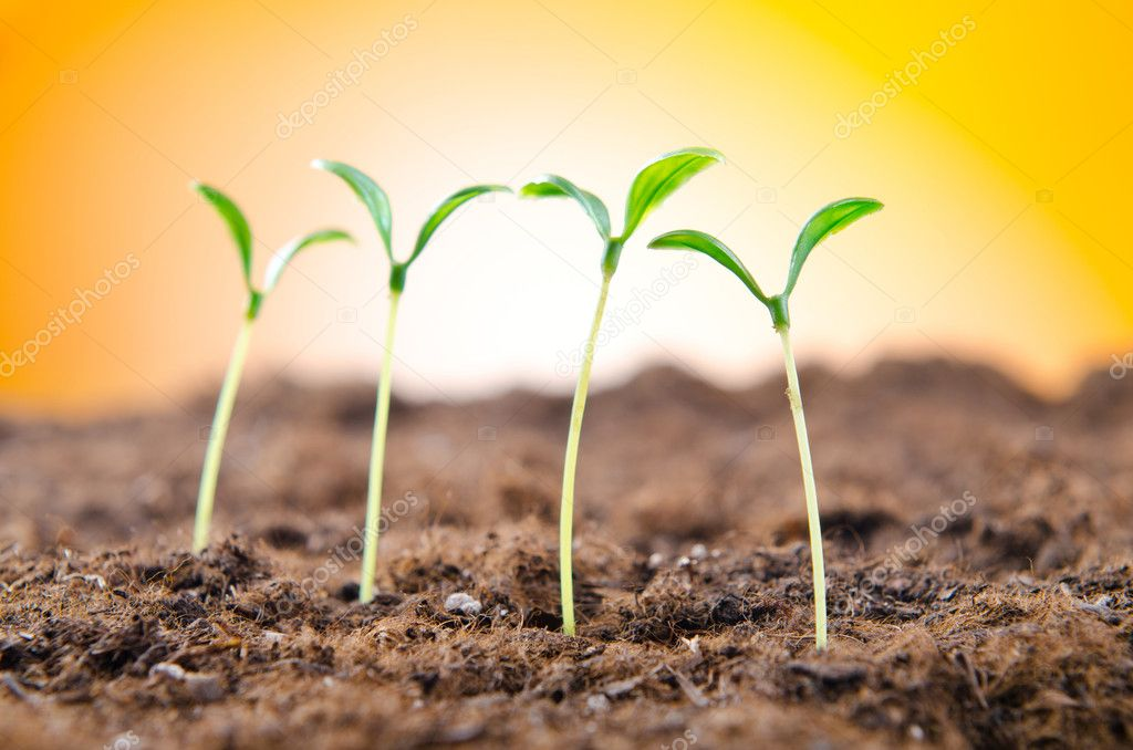 Green seedlings in new life concept — Stock Photo #6891745