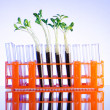 Stock Photo: Lab experiment with green seedlings