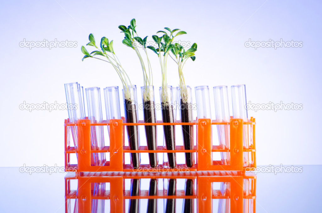 Lab experiment with green seedlings  Stock Photo #7110263