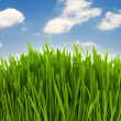Green grass against blue sky — Stock Photo
