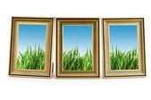 図枠の緑の芝生 — ストック写真