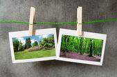 画像フレーム上の森林 — ストック写真