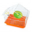 Bird cage isolated on the white background - Stock Photo
