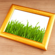 Green grass on the photo frame — Stock Photo