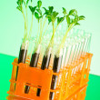 Experiment with green seedlings in the lab — Stock Photo