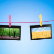 Stock Photo: Picture frames with nature photos