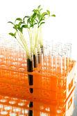 Laboratorium eksperyment z zielonych liści — Zdjęcie stockowe