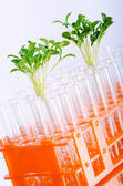 Laboratorium eksperyment z sadzonki zielone — Zdjęcie stockowe