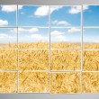Barley field cut into many photos — Stock Photo #7903392