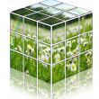 Cube with camomiles field — Stock fotografie