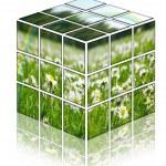 cubo com campo para fotos camomiles — Foto Stock