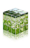 Cube with camomiles field — Stock Photo