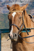 Horses at a hitching post — Stock Photo