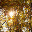 Autumn Leaves with sun rays — Stock Photo #7227985