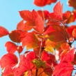 Autumn Leaves with sun rays — Stock Photo