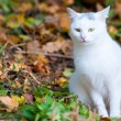 White cat on the autumn leaves - Stock Photo
