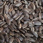 Seed — Stock Photo