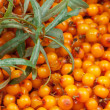 Sea-buckthorn - Foto de Stock