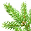 Green fir — Stock Photo #7492120