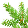Stock Photo: Green fir