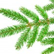 Green fir - Stockfoto