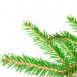 Green fir — Stock Photo #7492127