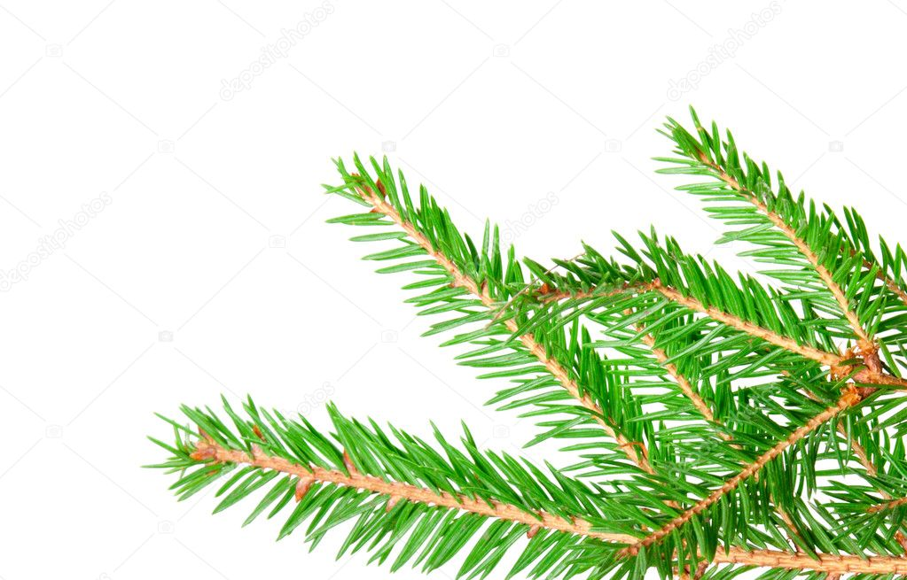 Green banch of fir isolated on white — Foto de Stock   #7492127