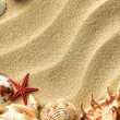Sea shell on sand — Stock Photo #7087156