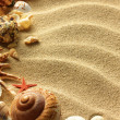 Sea shell on sand - Stock Photo
