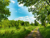 Forest road and blue sky — Stock Photo