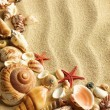 Sea shell on sand — Stock Photo #7542691