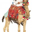 Bedouin on camel - 图库照片