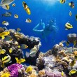 Coral colony, coral fish and young women - Stock Photo