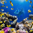 Stock Photo: Coral colony, coral fish and young women
