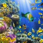 kolonii koralowców i ryb — Zdjęcie stockowe #7543043