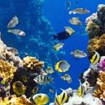 kolonii koralowców i ryb — Zdjęcie stockowe