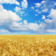 Wheat field — Stock Photo #7543156