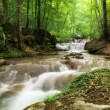 Creek in the forest — Stock Photo #7543163
