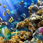 kolonii koralowców i ryb — Zdjęcie stockowe #7543220