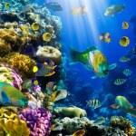 kolonii koralowców i ryb — Zdjęcie stockowe #7543228