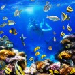 Coral colony and coral fish — Stock Photo #7543305