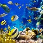 kolonii koralowców i ryb — Zdjęcie stockowe #7543358