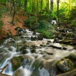 Creek in the forest — Stock Photo #7543406