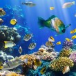 Coral colony and coral fish — Stock Photo #7543634